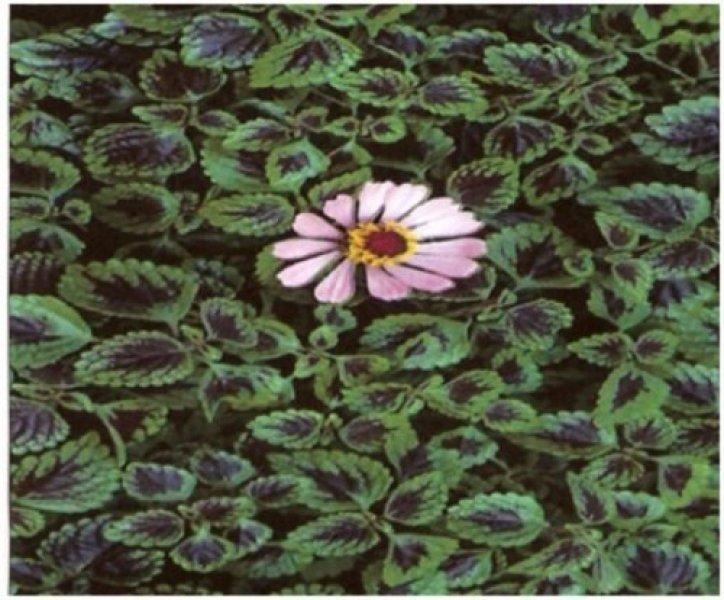 Monsoon Flora